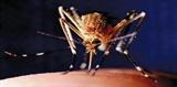 Cách cài phần mềm đuổi muỗi trên máy tính hữu ích cho dân thức đêm