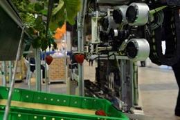 Video robot tiền tỷ của Nhật hái dâu tây